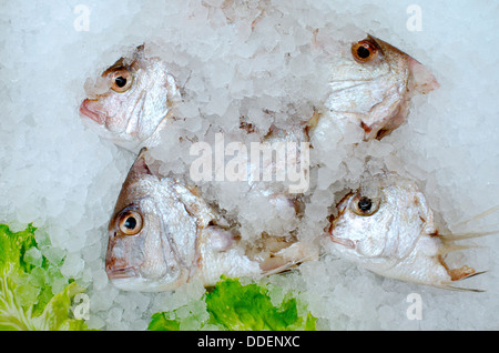 Fish heads of red snapper on ice on display at the fishermen market. - Stock Photo