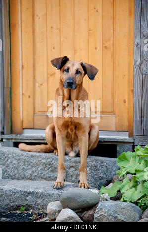Mixed-breed dog sitting in front of a door - Stock Photo