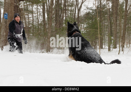 A German Shepherd jumps in several feet of snow, anticipating the throw of the stick that the man is holding. - Stock Photo