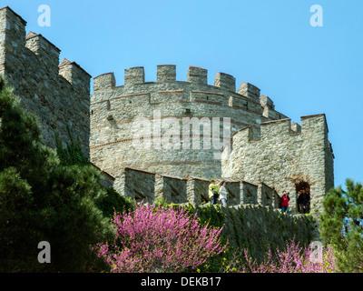 Istanbul, Sariyer, Rumelihisar, im Frühling blühen die Judasbäume - Stock Photo