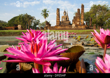 Red Water Lilies (Nymphaea rubra) in a pond in front of a seated Buddha statue at Wat Mahathat temple, Sukhothai - Stock Photo