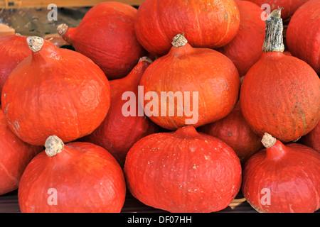 Pumpkins, Red Kuri Squash (Cucurbita maxima), weekly market at the Pferdemarkt, Horse Market square, Hanseatic town - Stock Photo