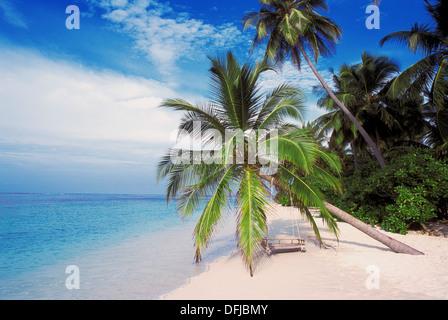 Palm Trees on Tropical Beach, Filitheyo Island, Faafu Atoll, Maldive Islands - Stock Photo