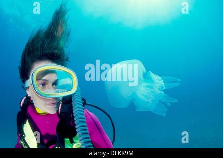 Diver and Stiff arms Jellyfish (Rhizostoma pulmo). Galicia, Spain - Stock Photo