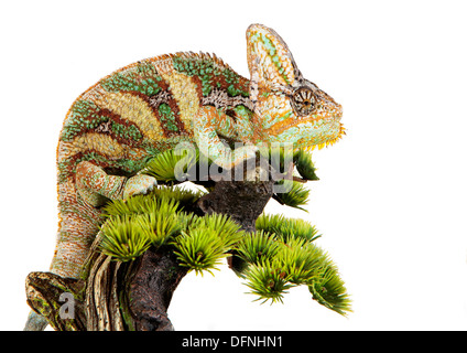 yemen chameleon in a host of artificial white background - Stock Photo