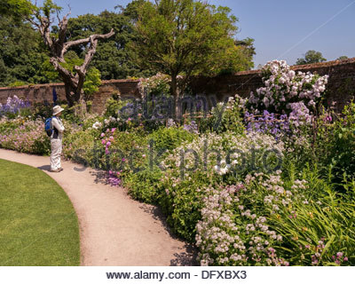 Woman looking at flowering plants in deep flower bed border in walled garden at Calke Abbey, Ticknall, Derbyshire. - Stock Photo