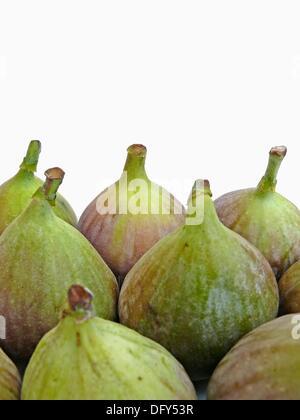 Fig fruit, Ficus carica L , Moraceae - Stock Photo