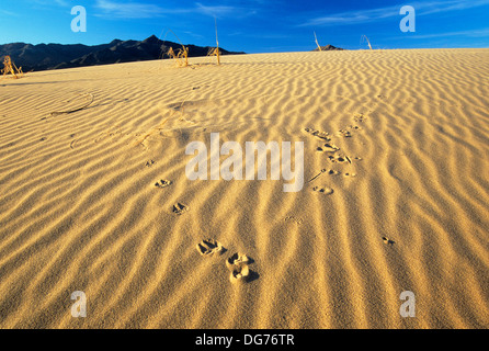 Kelso Dunes tracks, Mojave National Preserve, CA - Stock Photo