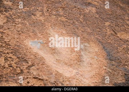 Dinosaur Footprints, Potash Road, near Moab, Utah, USA - Stock Photo