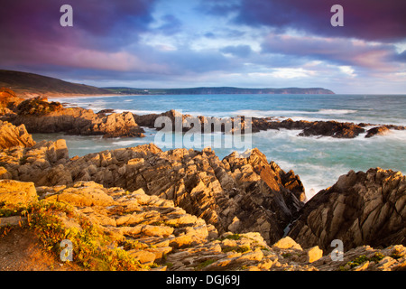 Evening light falls on the rocks of Barricane Beach in Woolacombe looking towards Baggy Point. - Stock Photo