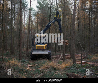 Forestry forwarder harvesting timber, working in a rough forest, Bonn, Rhineland, North Rhine-Westphalia, Germany - Stock Photo
