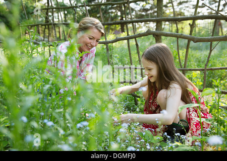 A mother and daughter together in a plant enclosure with a homemade fence. Picking flowers and plants. Green leafy - Stock Photo