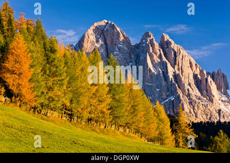 Villnoesstal or Val di Funes valley, in autumn, Odle Geisler massif at back, Puez-Geisler Nature Park, South Tyrol, - Stock Photo