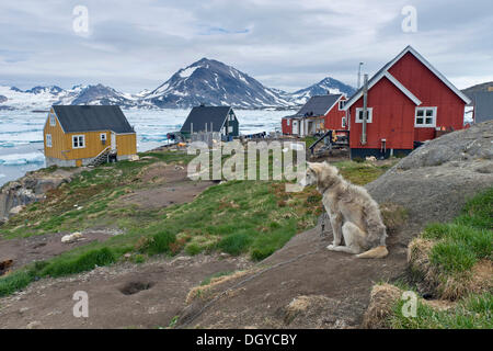 Husky and houses, Kulusuk, East Greenland, Greenland - Stock Photo