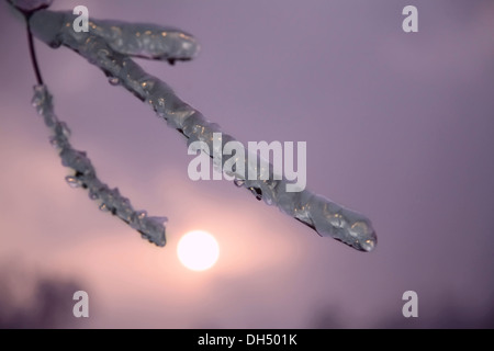 ice on twig of tree. park with trees in ice. Winter forest - Stock Photo