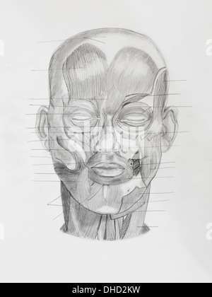 hand drawn pencil illustratin, frontview of human head with directive lines pointing at muscle parts, on white paper - Stock Photo