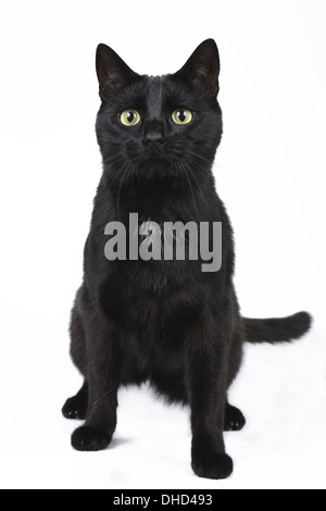 Black cat sitting - Stock Photo
