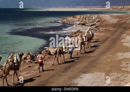 Salt caravan in Djibouti, going from Assal Lake to Ethiopian mountains, Djibouti, Africa - Stock Photo