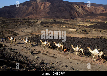Salt caravan in Djibouti, going from Assal Lake to Ethiopian mountains, Djibouti, Africa - Stock Photo