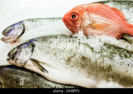 Close-up of fresh fish on a bed of ice for sale including red snapper. - Stock Photo