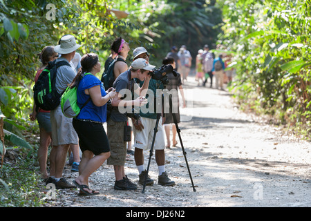 Tourists gather around a guide to get a look at the wildlife at the Manuel Antonio National Park in Costa Rica. - Stock Photo
