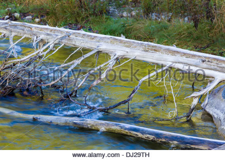 Frost on log and autumn colour reflected in Little Rouge Creek in Rouge National Urban Park in Toronto Ontario Canada - Stock Photo