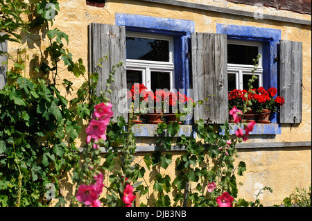 Windows with flowering Geraniums (Pelargonium Zonal Hybrid) on the Häckerhaus building, originally from Ergersheim, - Stock Photo