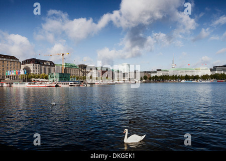 Hamburg Inner Alster with swan, Germany - Stock Photo