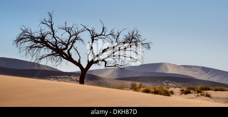 Tree at the foot of Dune 45, with dunes rendered silver and purple by the afternoon sun, Namib Naukluft, Namibia, - Stock Photo