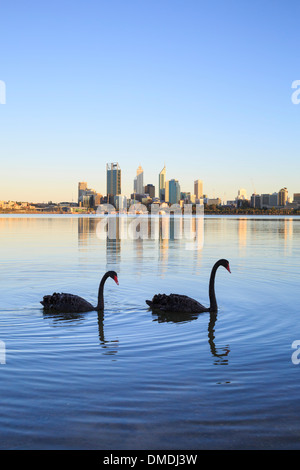 Two black swans (Cygnus atratus) on the Swan River with Perth city in the distance. Perth, Western Australia - Stock Photo