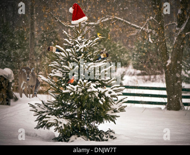 A Spruce tree in the snow decorated with a Santa hat and mitts, with colorful winter birds perched on its branches, - Stock Photo