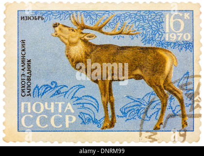 USSR - CIRCA 1970: Postage stamp printed in USSR shows image of a Cervus elaphus xanthopygus (manchurian) - Stock Photo