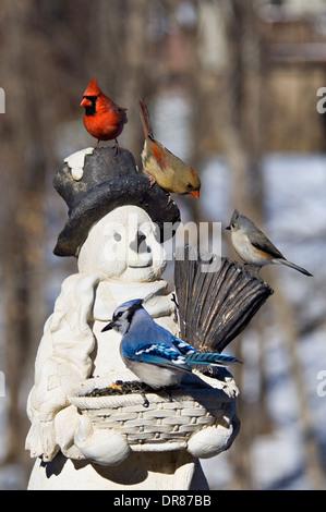Backyard Birds on Snowman Feeder - Stock Photo