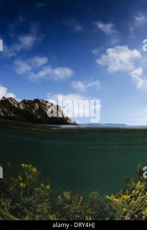 A split shot of seaweed in the sea. - Stock Photo