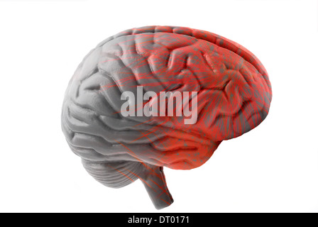 model human brain digitally manipulated to signify activity - Stock Photo