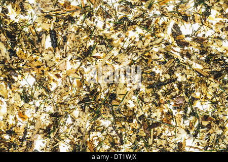 Close up of wood chips pine needle and organic garden mulch - Stock Photo