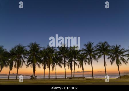 Row of palm trees on Copacabana beach, Rio De Janeiro, Brazil - Stock Photo
