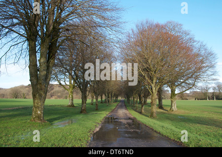 Beautiful English countryside on a sunny winter afternoon. A tree lined avenue leads to the tiny Dorset village - Stock Photo