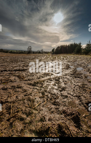 Saturated field in Gloucestershire England February 2014 after wettest winter on record - Stock Photo