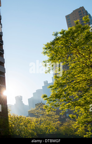 Early morning light on 42nd St in Midtown Manhattan New York City, USA - Stock Photo
