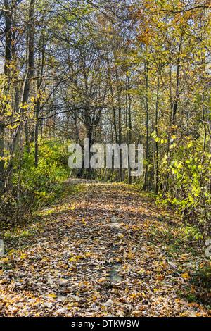 Im Herbst - Stock Photo