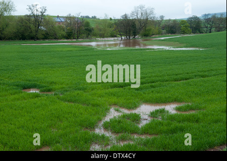 Waterlogged grassland after spring flooding. Cumbria. - Stock Photo