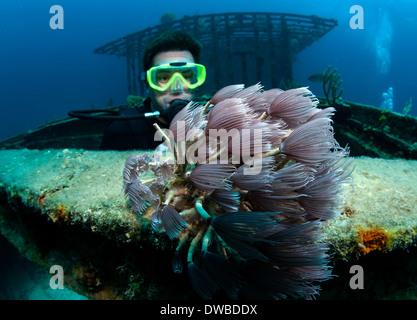 Diver views marine life on wreck. - Stock Photo