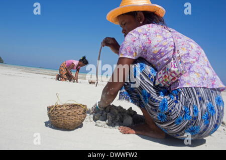 Mar 1, 2014 - Ko Surin, Thailand - Moken women forage for food during low tide at a beach near their village in - Stock Photo