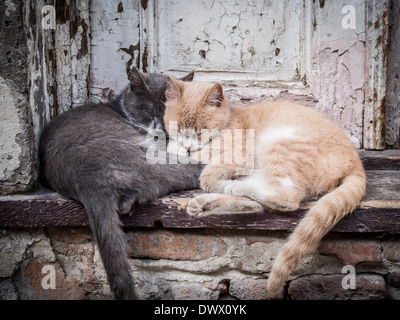 Horizontal photo of two street cats (one red and one gray) hugging, sleeping together on stairs, in from of an old - Stock Photo