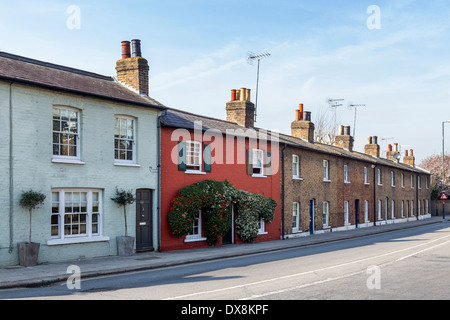 Row of Typical traditional English terraced cottages with shutters and pruned berry bushes, Twickenham, London, - Stock Photo