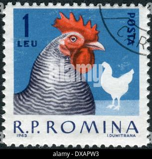 ROMANIA - CIRCA 1963: Postage stamp printed in Romania shows hen, circa 1963 - Stock Photo