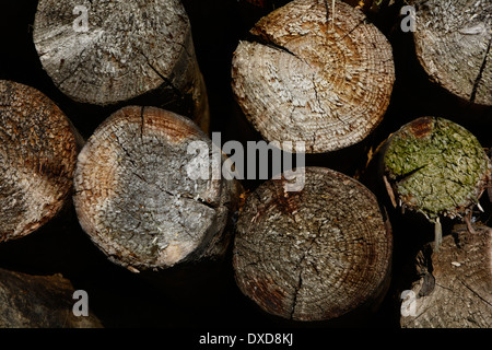 Old tree trunks wooden staple Close up macro texture background full-frame alte Holzstämme Baumstämme Nahaufnahme - Stock Photo