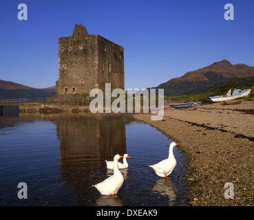 Carrick castle from the shore of Loch Goil,Argyll,Scotland.with Geese. - Stock Photo