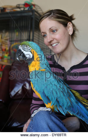 A blue and gold macaw parrot perched on a woman's knee. - Stock Photo